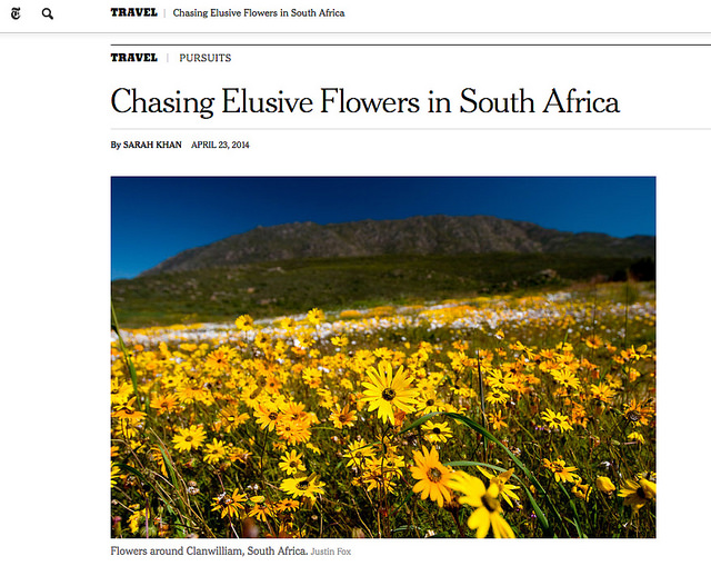 New York Times: Chasing Elusive Flowers in South Africa