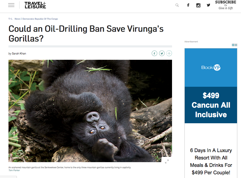 Travel + Leisure: Could An Oil-Drilling Ban Save Virunga's Gorillas?