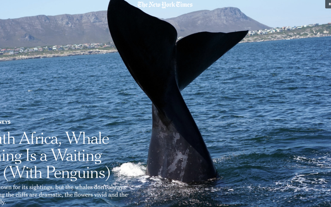 New York Times: In South Africa, Whale Watching Is a Waiting Game (With Penguins)