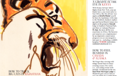Town & Country: How to Track Big Cats in Rajasthan